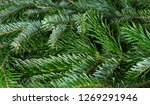closeup of  spruce branches... | Shutterstock . vector #1269291946