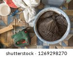 domestic cat fell asleep in the ... | Shutterstock . vector #1269298270