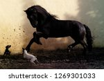 black stallion portrait   Shutterstock . vector #1269301033