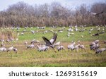 flock of  migrating common... | Shutterstock . vector #1269315619