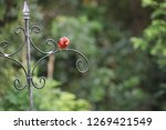 red male northern cardinal... | Shutterstock . vector #1269421549