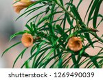 a green flowering plant | Shutterstock . vector #1269490039