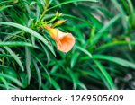 a green flowering plant | Shutterstock . vector #1269505609
