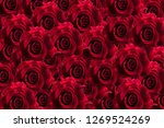 Stock photo red rose background 1269524269