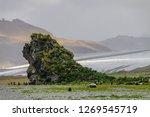 a group of fur seals  ...   Shutterstock . vector #1269545719