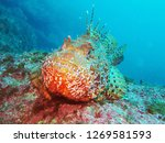 Scorpaenidae  Also Known As Th...