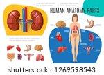 human anatomy infographic...   Shutterstock .eps vector #1269598543