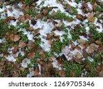 green grass mixed with yellow... | Shutterstock . vector #1269705346