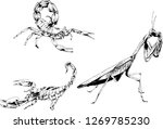 vector drawings sketches... | Shutterstock .eps vector #1269785230