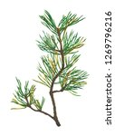 pine branch isolated on white... | Shutterstock . vector #1269796216