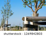 afforestation with deciduous... | Shutterstock . vector #1269842803