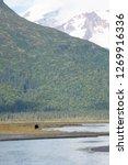 Chinitna Bay Alaska with Brown Bear