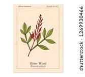 bitter wood  quassia amara  or... | Shutterstock .eps vector #1269930466
