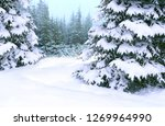 Winter Forest With Spruces...
