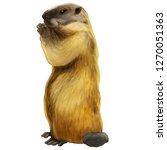 illustration of a animal  ... | Shutterstock . vector #1270051363