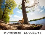 st petersburg  russia   may 23  ... | Shutterstock . vector #1270081756