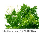 top view of the small plant... | Shutterstock . vector #1270108876