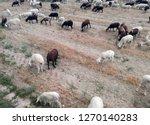 ruminant domestic mammalia.... | Shutterstock . vector #1270140283