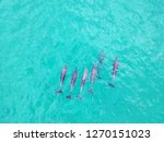 dolphins swimming  byron bay. | Shutterstock . vector #1270151023