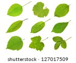 Collection Fruit Leaves...