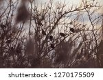 birds silhouettes in the midst... | Shutterstock . vector #1270175509