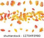 oak  maple  wild ash rowan... | Shutterstock .eps vector #1270493980