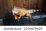 the iguana is a genus of... | Shutterstock . vector #1270679629