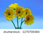 yellow gerbera in a vase | Shutterstock . vector #1270700383