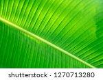 closeup nature view of green...   Shutterstock . vector #1270713280