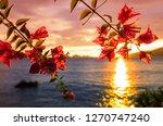 fantastic tropical sunset in... | Shutterstock . vector #1270747240