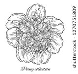peony flower hand drawn in... | Shutterstock .eps vector #1270751809