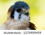 american kestrel lose up | Shutterstock . vector #1270909459