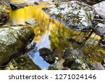 reflection of trees in pool of... | Shutterstock . vector #1271024146