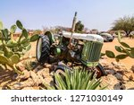 namibia   20th september 2015  ... | Shutterstock . vector #1271030149