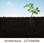 cross section view of a plant... | Shutterstock . vector #127106006