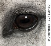 Close Up Of An Andalusian Eye ...