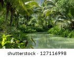 River And Palm Forest In...