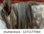 a closeup of a dappled gray... | Shutterstock . vector #1271177083