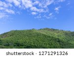 bright green mountain against...   Shutterstock . vector #1271291326