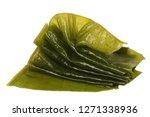 laminaria  kelp  seaweed... | Shutterstock . vector #1271338936