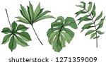 vector exotic tropical hawaiian ... | Shutterstock .eps vector #1271359009