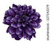 Dahlia Illustration