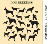 Stock vector dog breeds silhouettes 127144034