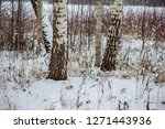 winter day in forest  trees... | Shutterstock . vector #1271443936