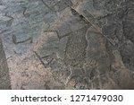 Petroglyph Moose On Cape Besov...