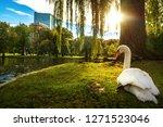 white swan in lake on the paek... | Shutterstock . vector #1271523046