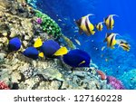 Coral And Fish In The Red Sea....