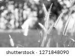 close up flower grass and... | Shutterstock . vector #1271848090