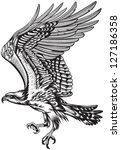 animal,beak,bird,black,claw,diving,eagle,falcon,feather,freedom,graphic,hawk,head,hunting,illustration