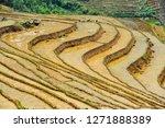 Vietnam's Terraced Fields.